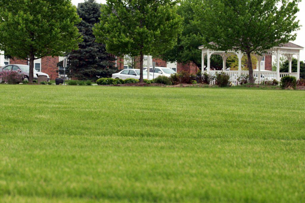 more lawn